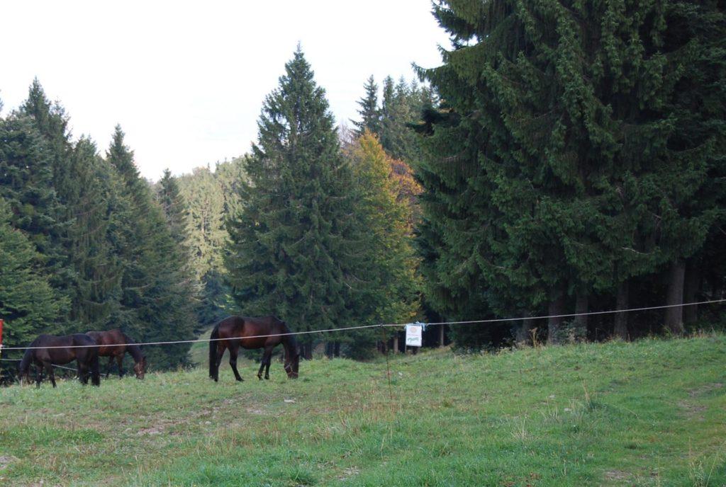Foto: M.Tancer - Pohorje mountain near Maribor.
